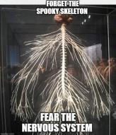 body brain human impact nerves nervous skeleton spine spooky system text // 1080x1261 // 484.1KB